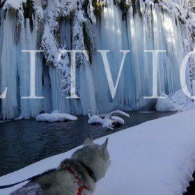 Plitvice winter husky