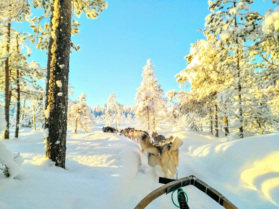 Mushing Laponie Musher Experience