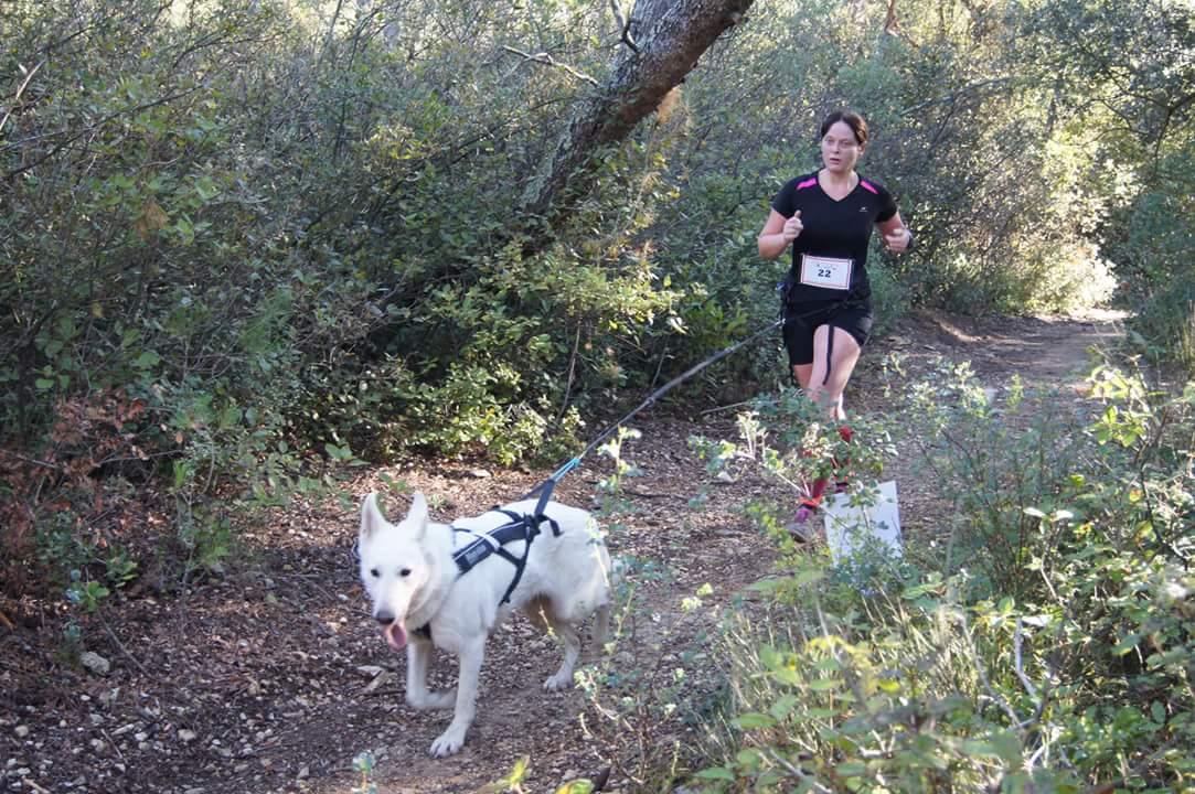 canicross des garrigues race de chien courir (3)