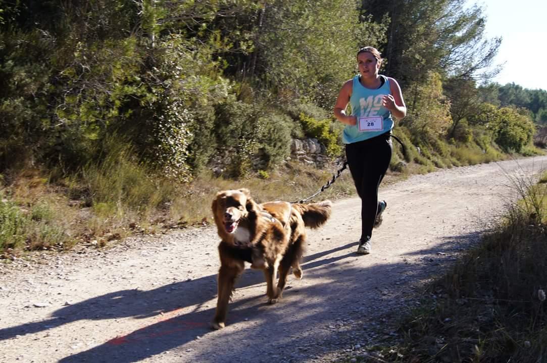canicross des garrigues race de chien courir (5)