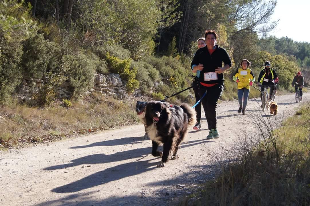canicross des garrigues race de chien courir (6)