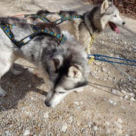 Faire une ligne de trait 3 chiens