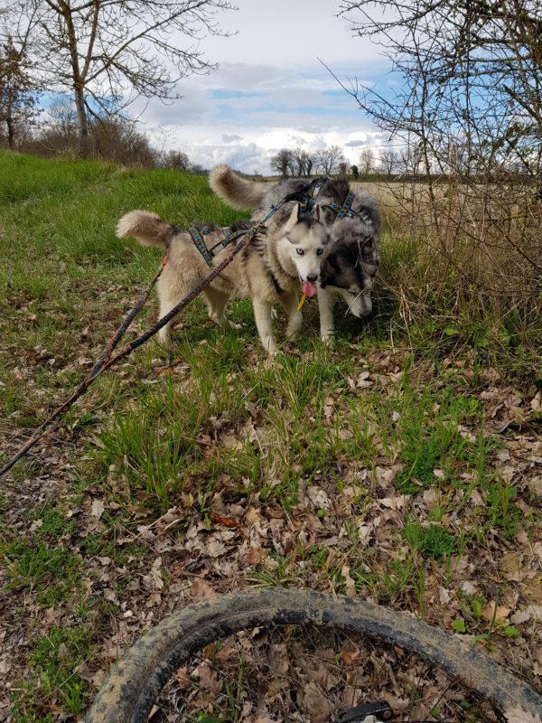 canivtt deux chiens Chaussures pour chiens protection des coussinets