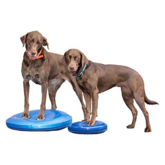 coussin de proprioception pour chien