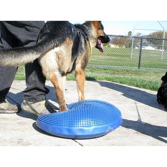 coussin de proprioception pour chien berger allemand
