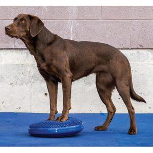 coussin de proprioception pour chien profil