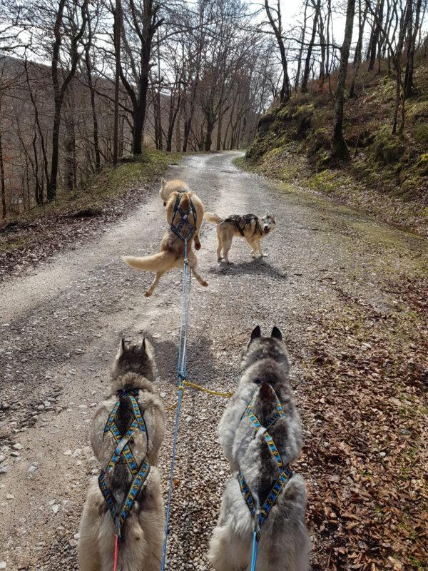bonne taille de harnais xback pour mon chien saute will to go