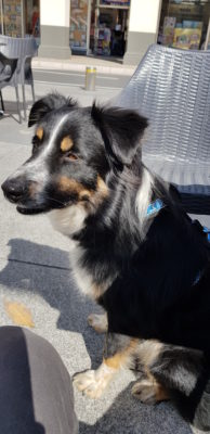 chien de refuge adopte par mes parents