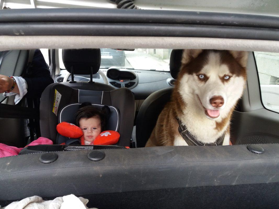 husky siberien et bebe