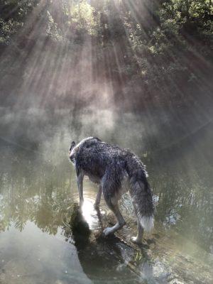 instant magique luna husky siberien musher experience