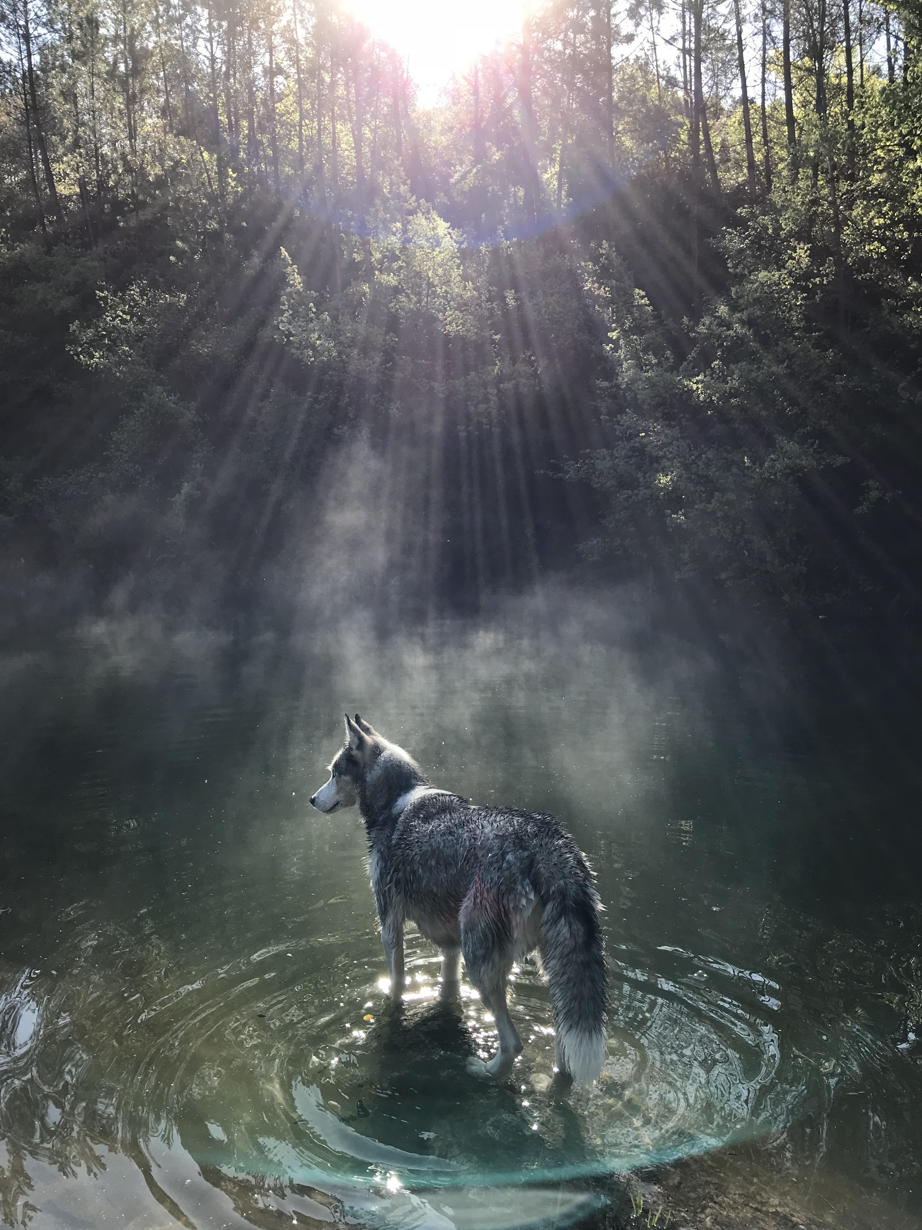 nature luna husky siberien musher experience