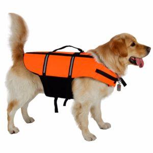 gilet de sauvetage pour chien orange race de chien