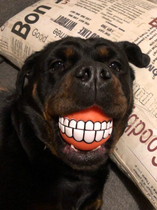 balle smile dog balle pour chien