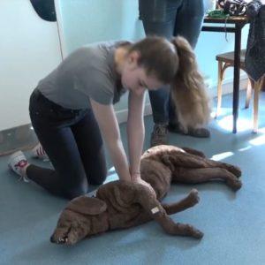 massage cardiaque chien