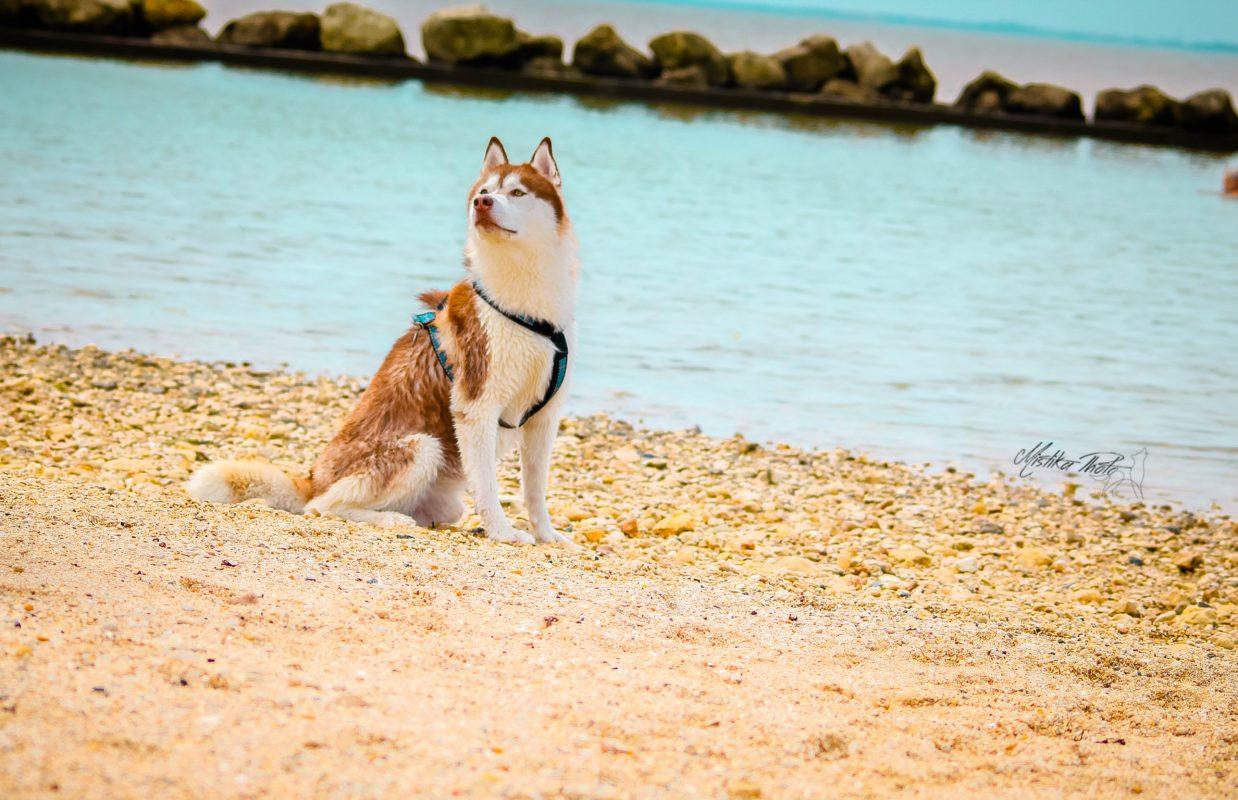 husky a la mer