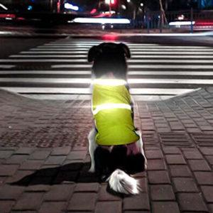 gilet réfléchissant pour chien