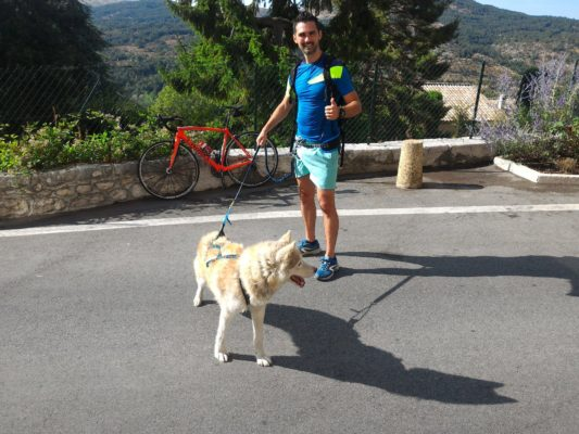 canicross harnais chien pour courir