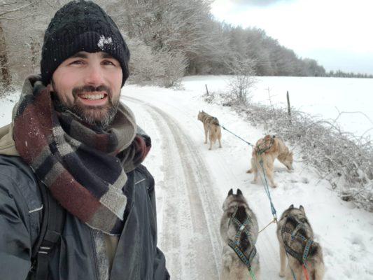 harnais de chien de traineau - attelage husky siberien
