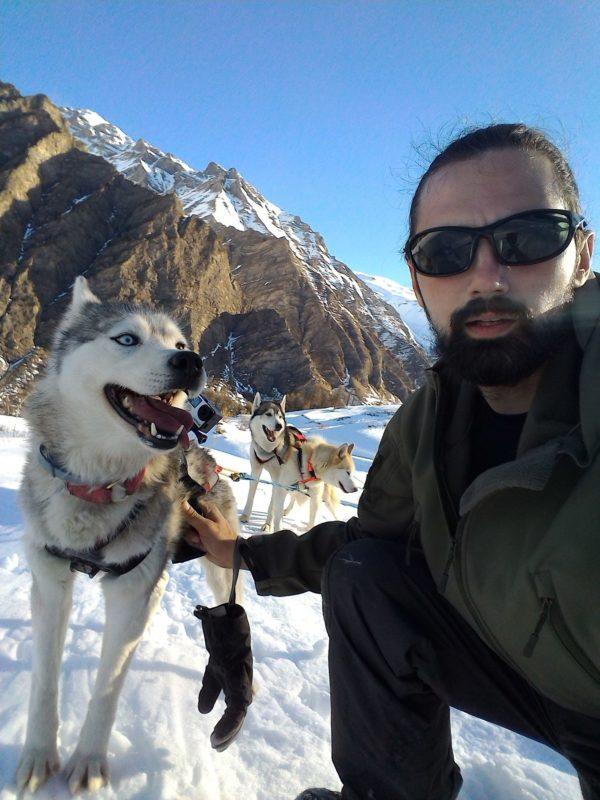 harnais de chien de traineau husky siberien