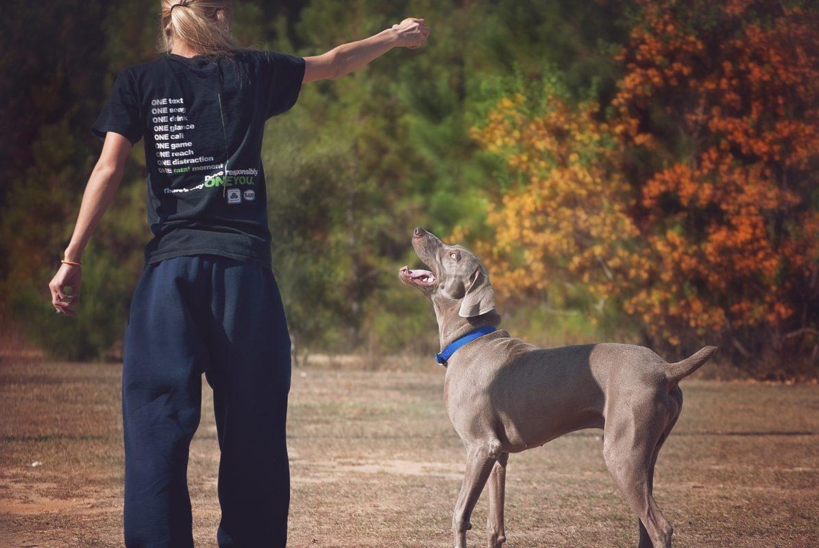 Canivtt quand donner à manger à son chien