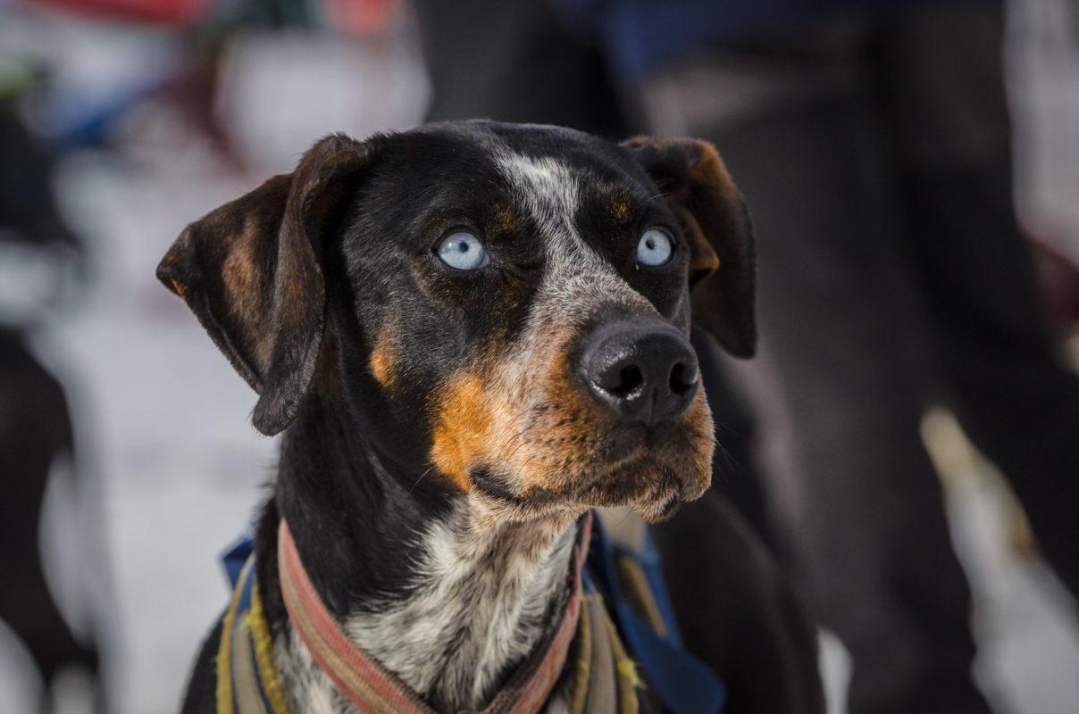 Eurohound - sports.vice.com - Quel chien pour course à pied