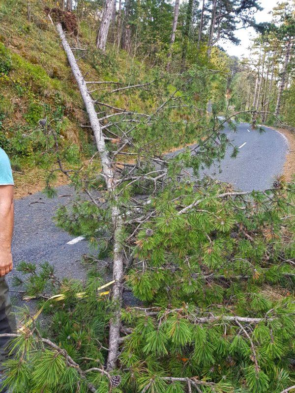 arbre tombe sur la route - montagne noire - occitanie