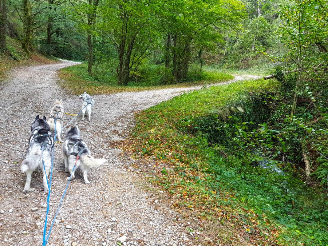 attelage canin - ligne de trait pour chiens