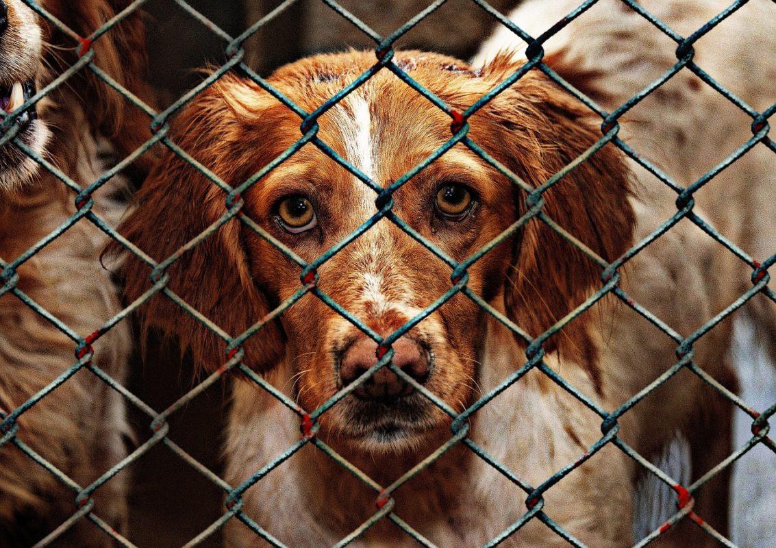 chien de refuge - Quel chien pour la course à pied