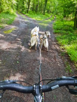 equipement canivtt - canivtt 2 chiens husky siberien