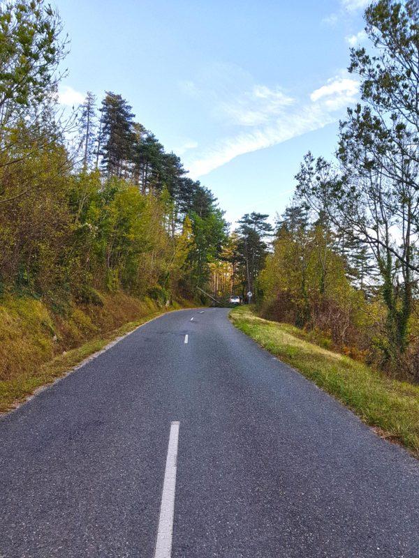 route montagne noire - arbre effondre grand vent