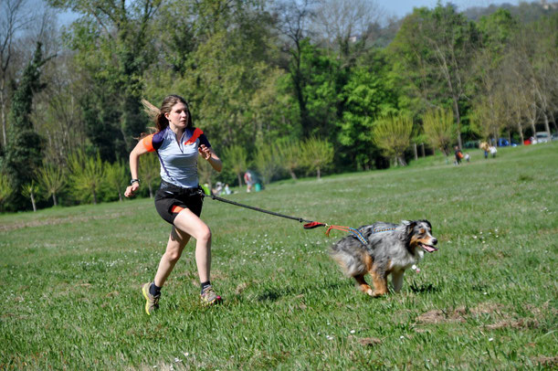 canicross-chien-berger-australien-running-course-à-pied