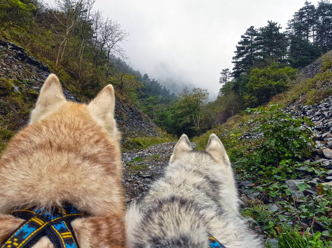 chien de traineau attelage canin chemin pierre