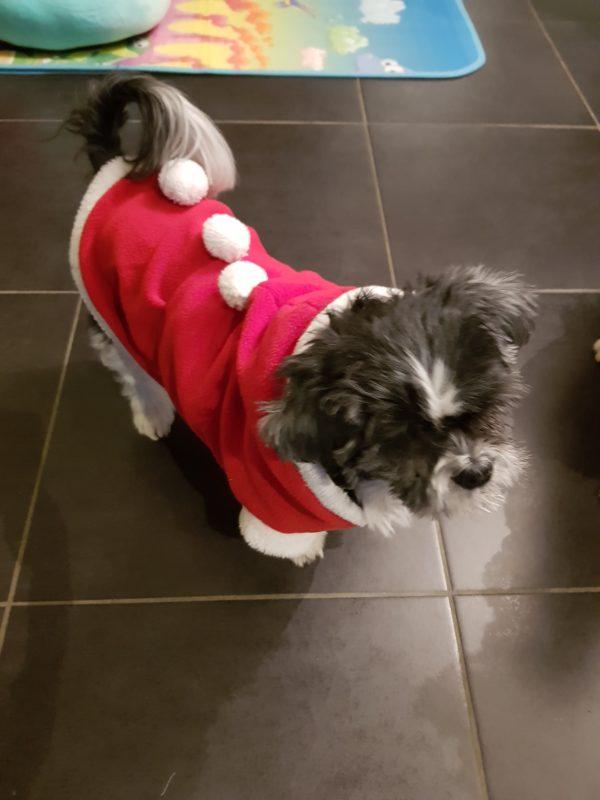 manteau pour chien fete noel