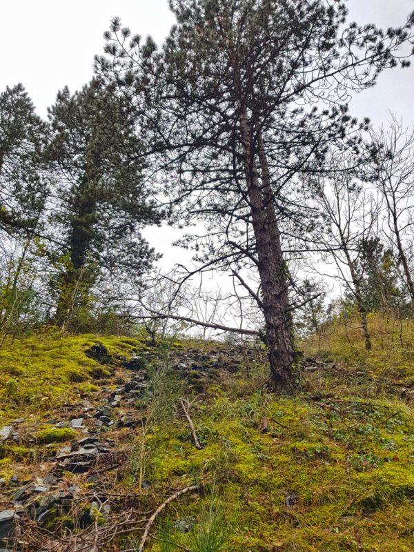 nature bush outdoor aventure sport