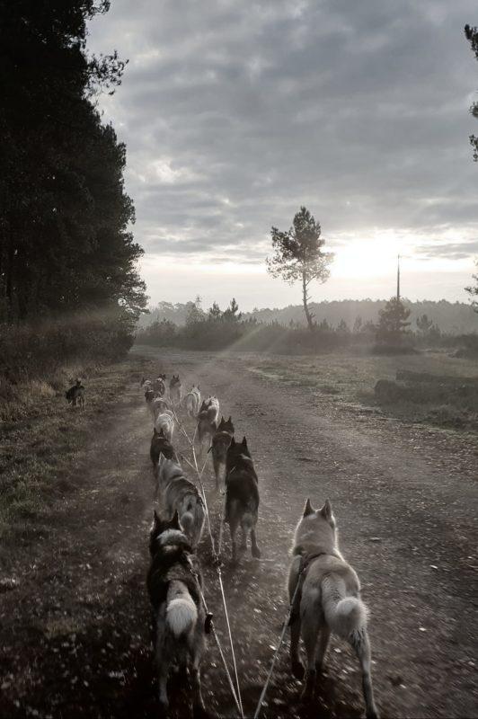 attelage canin sans neckline- Catherine Fontaine