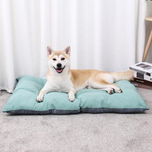 coussin pour chien shiba inu