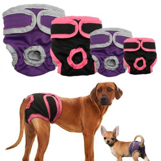 culotte de chien - chaleurs chez la chienne
