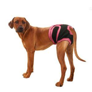 culotte de chien - chaleurs chez la chienne grand chien