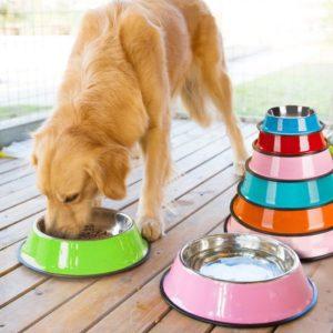 gamelle pour chien coloree en acier inoxydable