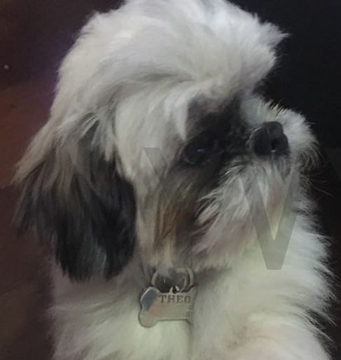medaille chien os personnalise shih tzu