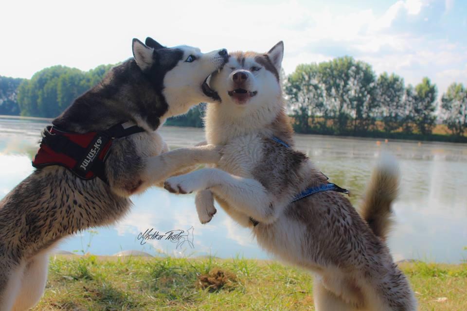 husky jeux