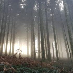 foret somptueuse montagne noire