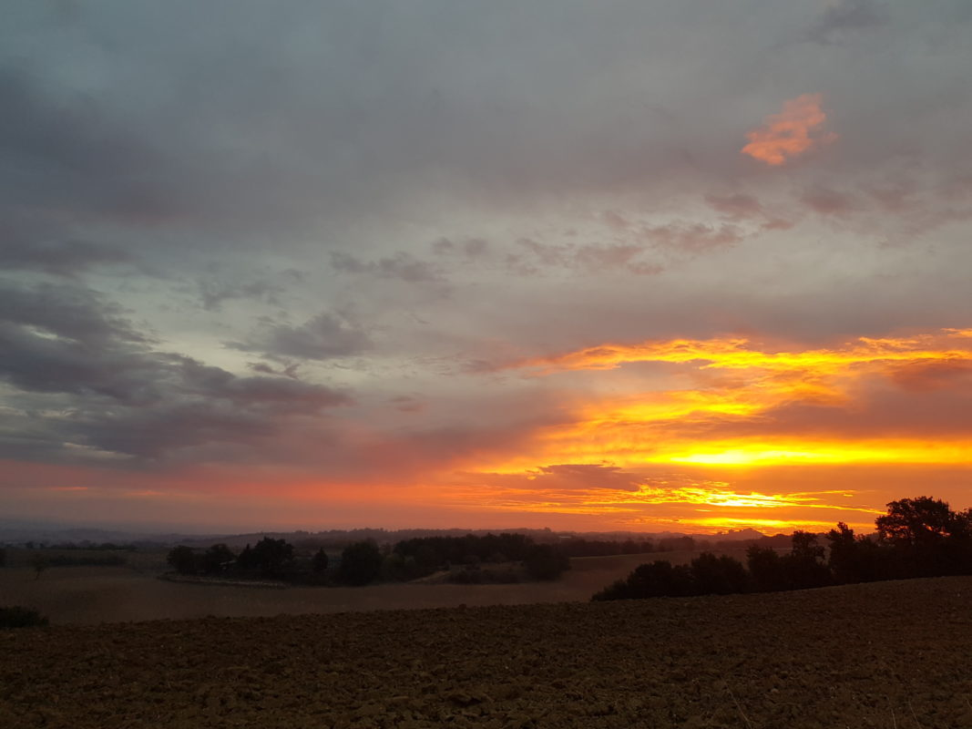 canicross lever de soleil