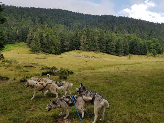 partir aventure avec ses chiens