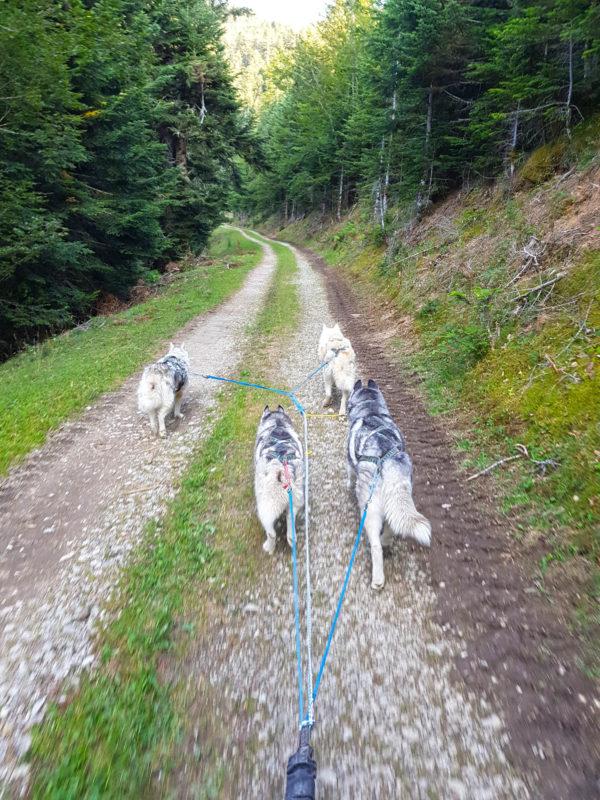 piste chemin attelage canin
