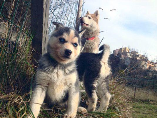 Jeune-chien-a-quel-age-acheter-son-premier-harnais-pour-chien