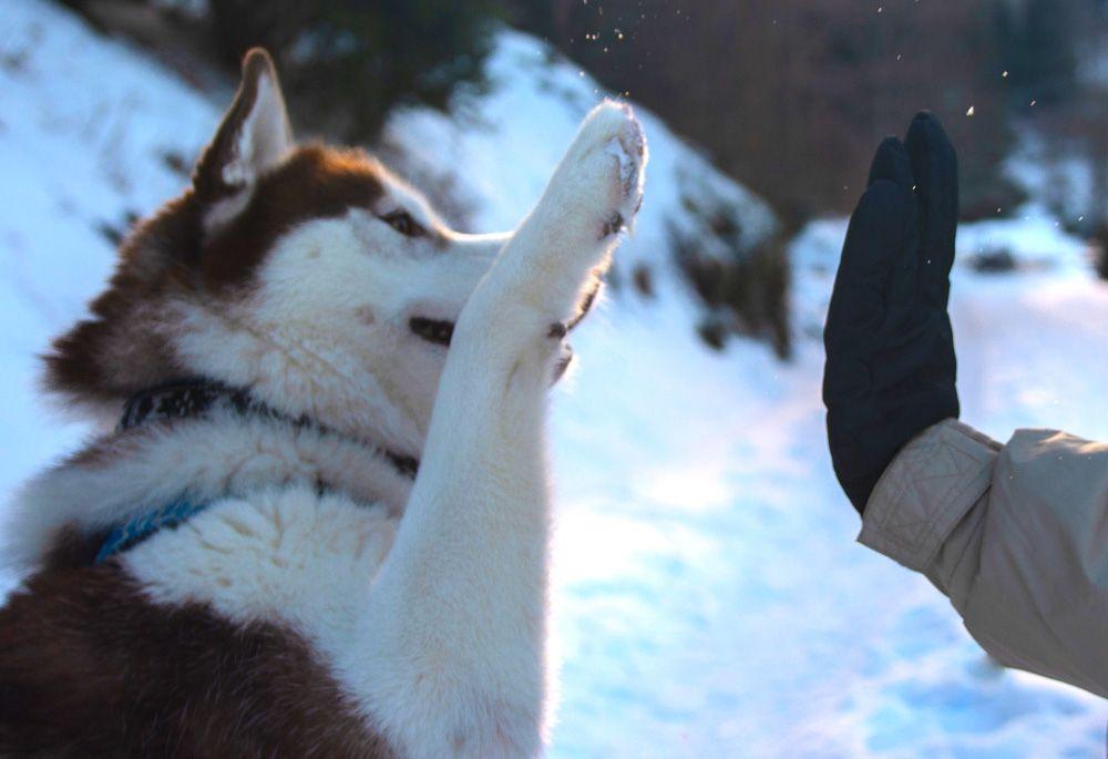apprendre-les-directions-a-son-chien