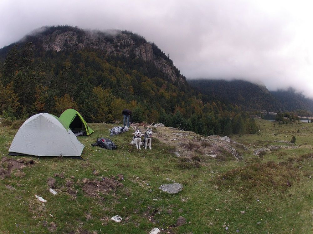 camping-sauvage-avec-chiens