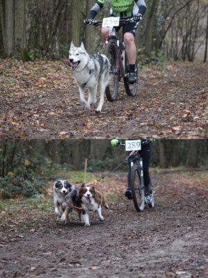 cani-vtt-ou-cani-trottinette-activite-sportive-avec-son-chien