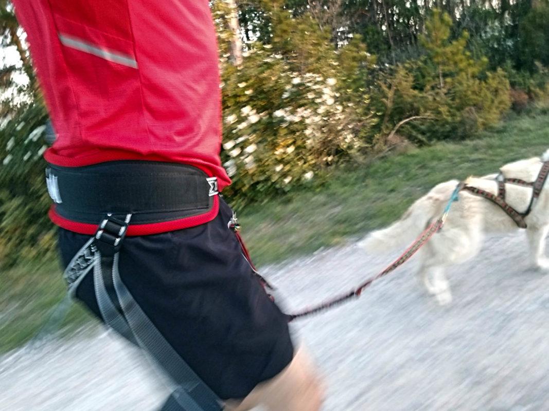 canicross courir avec son chien equipement